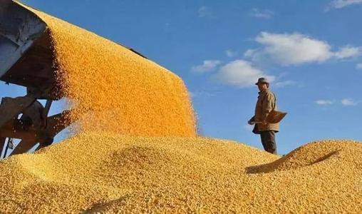 乌克兰政府做出决定,不会限制玉米出口