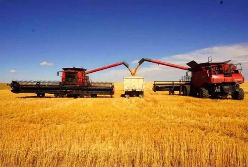 乌克兰面粉出口增长11%