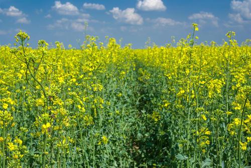 欧盟正式承认乌克兰种子认证体系生效