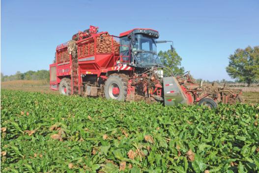 乌克兰继续保持其甜菜和甜菜糖世界生产国地位