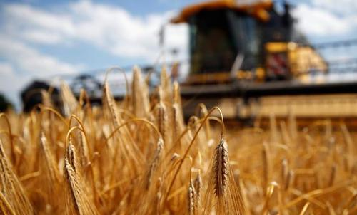 中国保持乌克兰大麦主要进口国地
