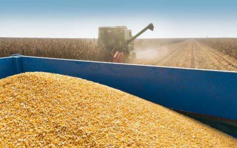 一季度中国保持乌克兰第一大玉米进口国地位