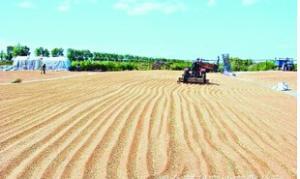 本年度乌克兰对中国的大麦出口创下历史新高