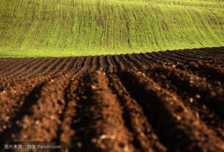乌克兰2019年冬季谷物种植率为46%