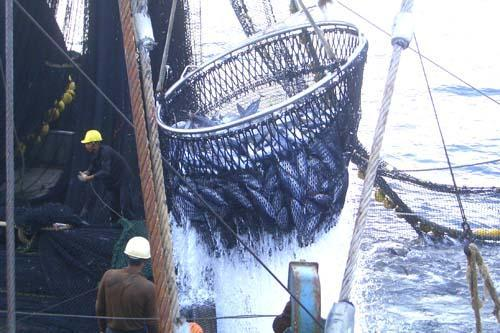 乌克兰2018年鱼及其制品出口额达3710万美元