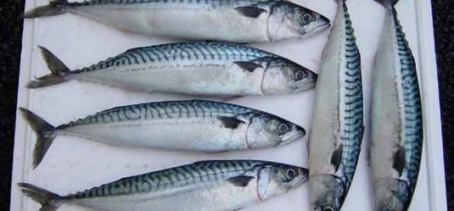 乌克兰1月份成品鱼和罐制鱼出口增长9%